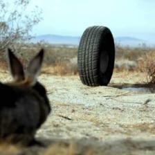 Konijn VS autoband